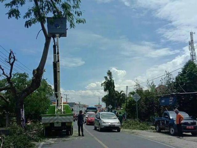 Pangkas Pohon meminimalisir Kecelakaan